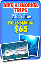 Dive and Snorkel Trips